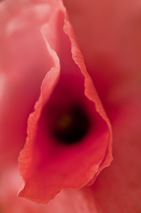 Vulvodynia – przewlekły ból w żeńskich genitaliach